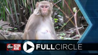 Diseased-monkey-FULLCIRCLE.png