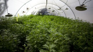 Marijuana Cultivation Facility