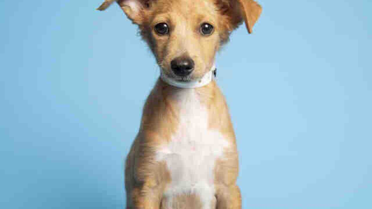 Adoptable pets from Arizona Humane Society and Maricopa County Animal Care (8/29)
