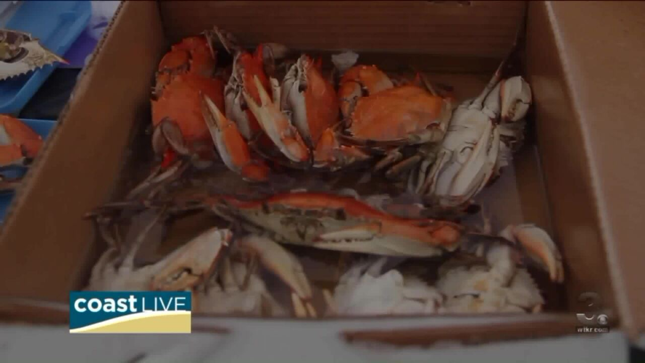 A tasty preview from Hampton's Crabtown Seafood Festival on Coast Live