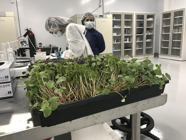 PHOTOS: Oasis Biotech brings indoor farming to Las Vegas