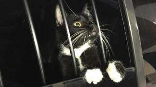 cat-burglar.png