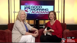 Pet Paws: Adoptions and Fundraising at Animal Aid