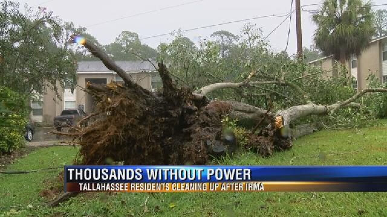 Tallahassee clean up begins for Irma aftermath