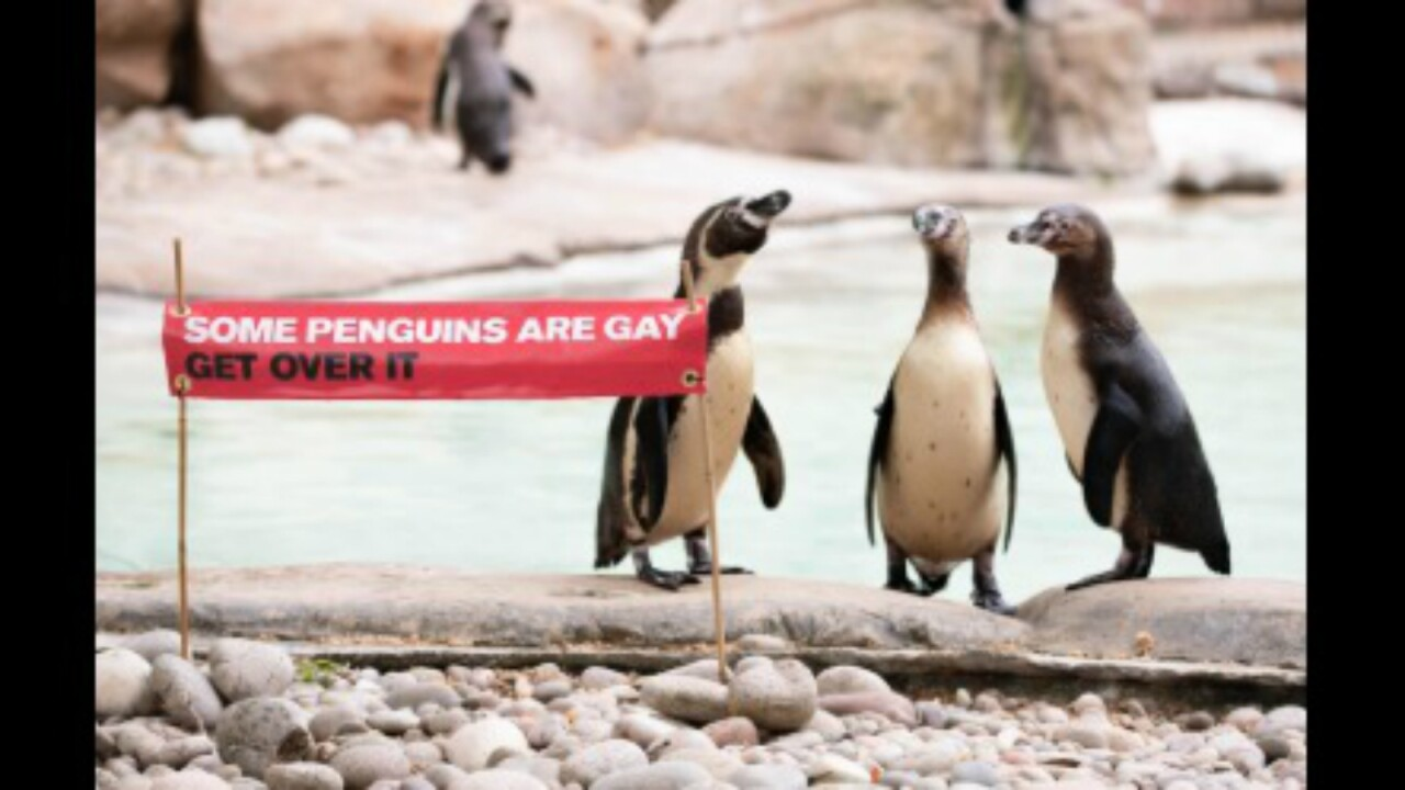 The London Zoo is celebrating Pride month in honor of its gay penguins
