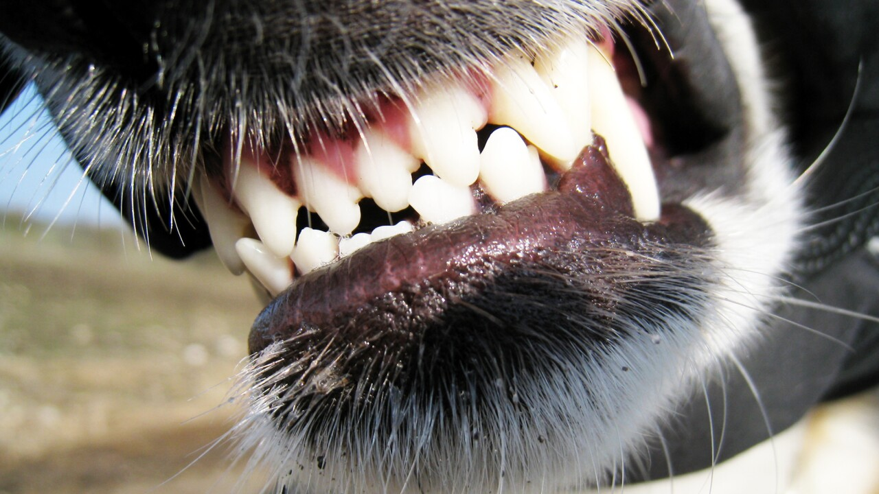 Man shoots dog after attack in Chesapeake, owner firesback