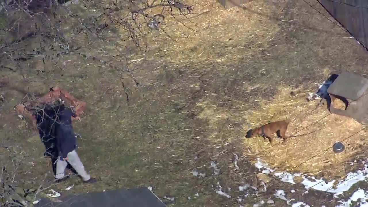 Suspect charged in Detroit dog fighting ring bust