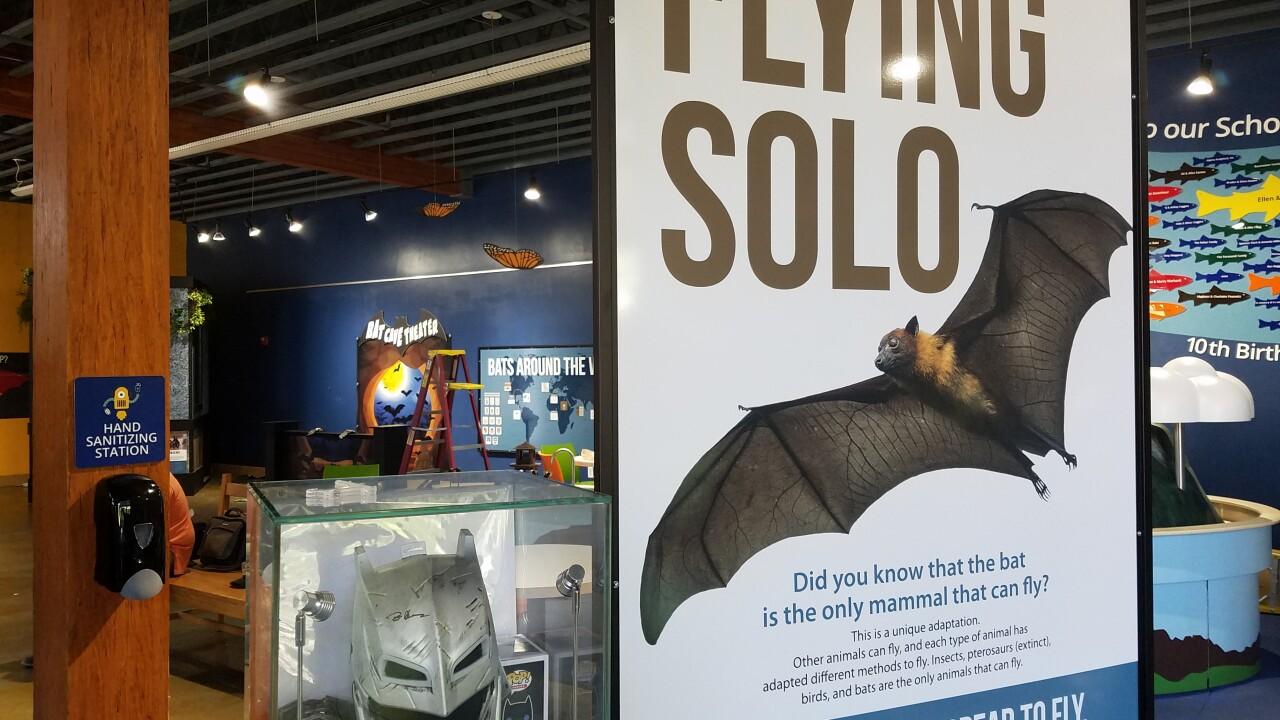 Soar with Bats