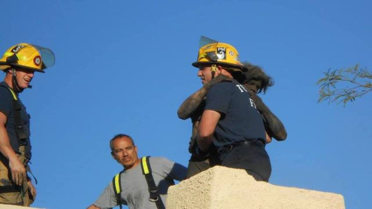 Man rescued after stuck in chimney for 4 hours