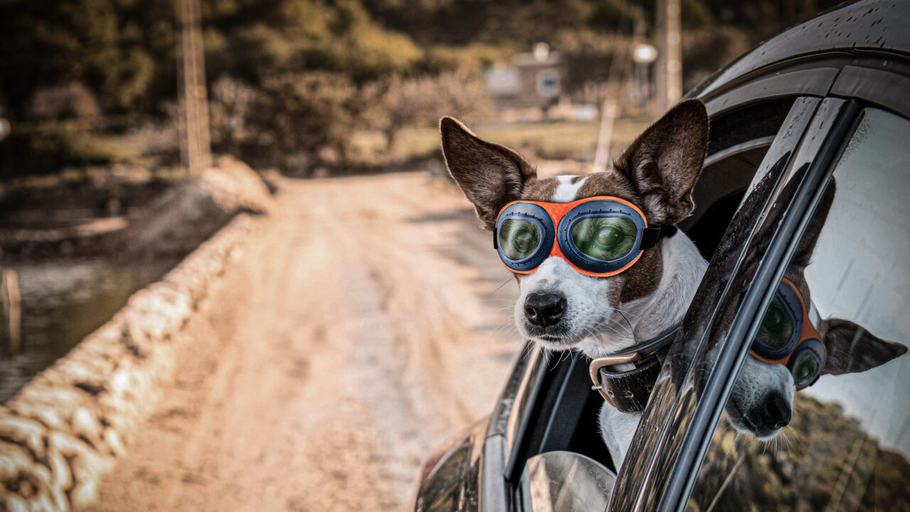 You could win a free pair of dog goggles for your pup
