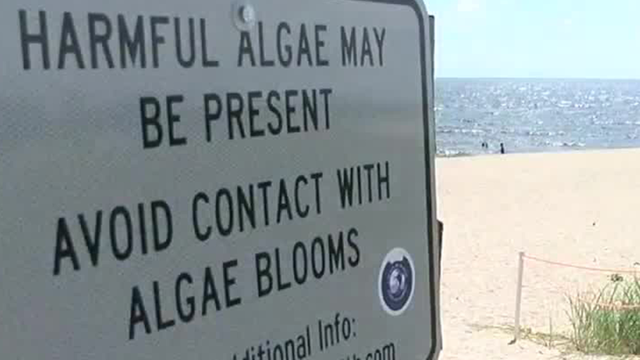 Concerns in Martin County over beach algae into holiday weekend
