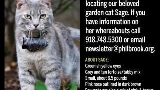 Missing Philbrook Cat