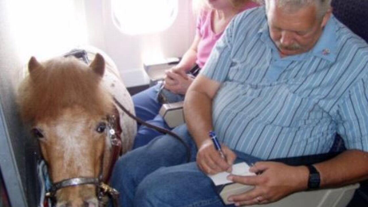 plane horse pic 1.JPG
