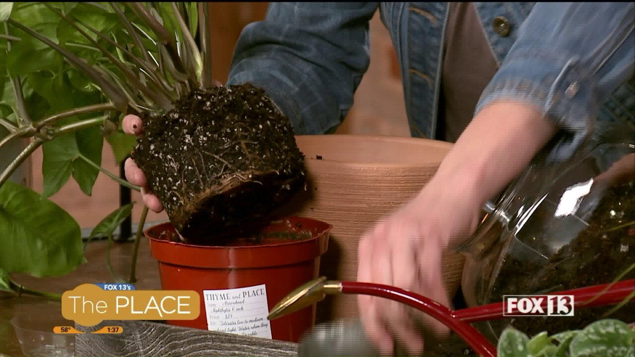 Why, when and how to re-pot a houseplant