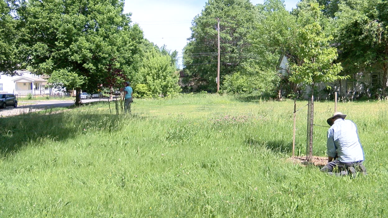 Cleveland's Union Miles neighborhood getting more trees thanks to new grant
