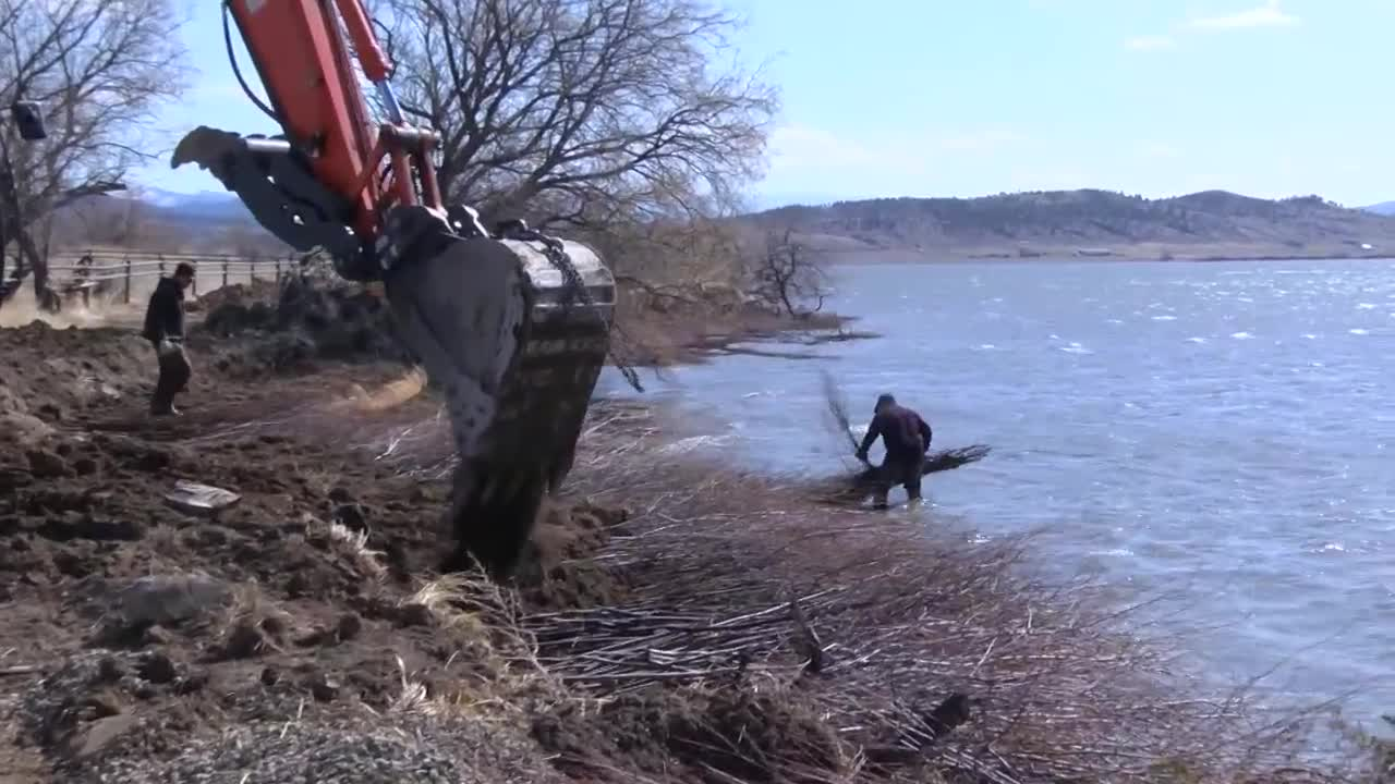 Landowner uses willows to prevent bank erosion