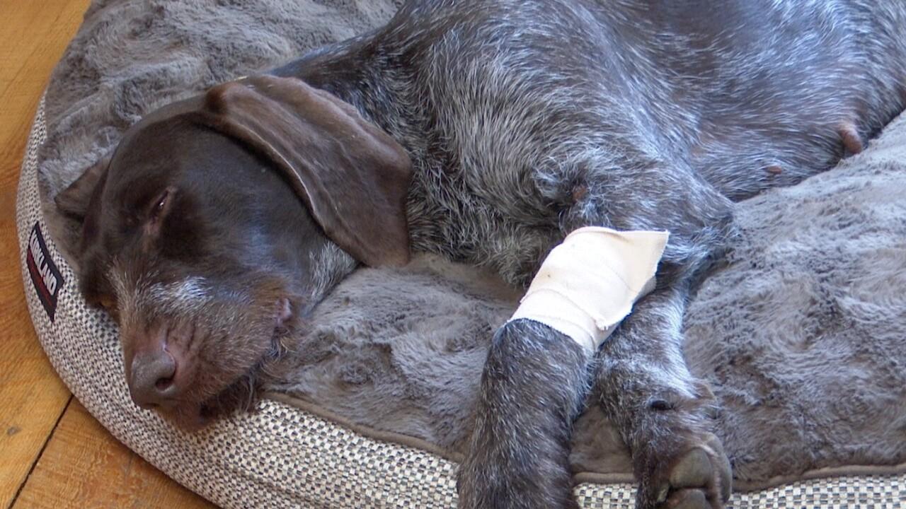 "Investigators find ""no evidence"" of Ravalli dog poisonings"