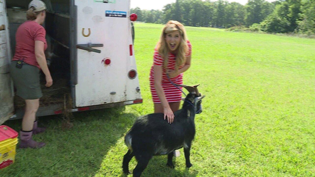 Nikki-Dee learns how RVA Goats keep Richmondbeautiful
