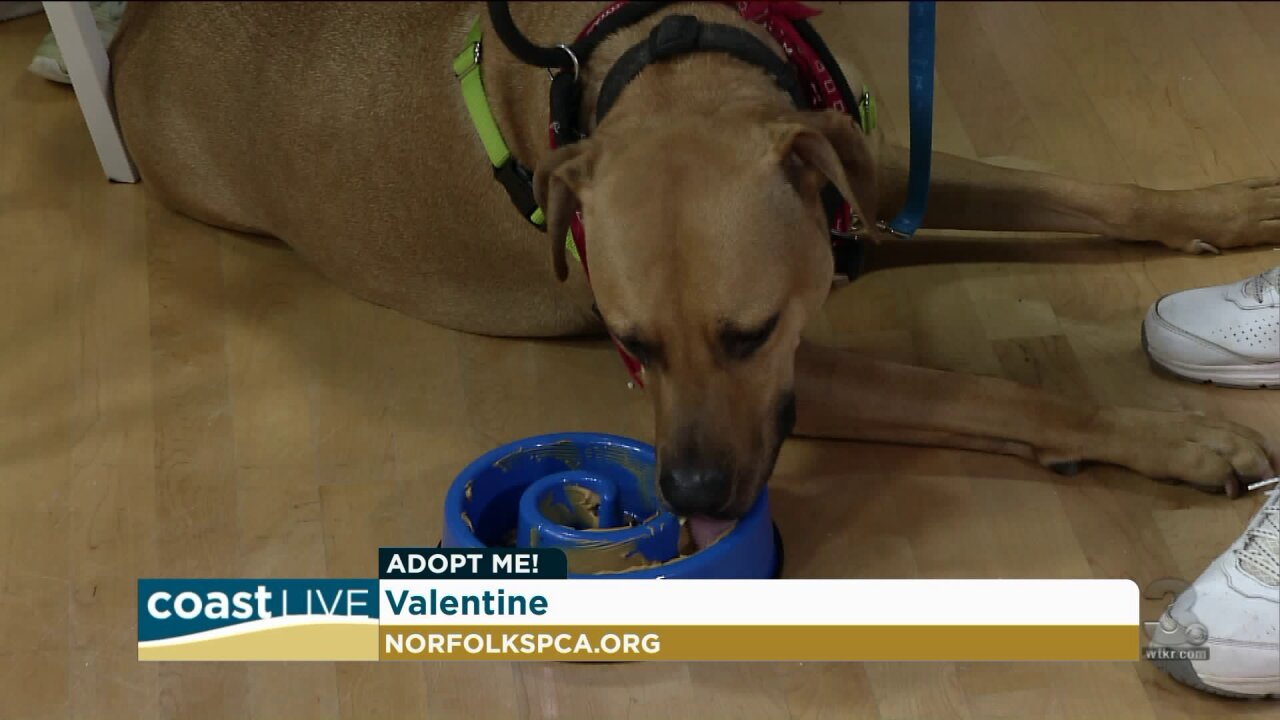 Cool treats and tips for pets on hot summer days on Coast Live