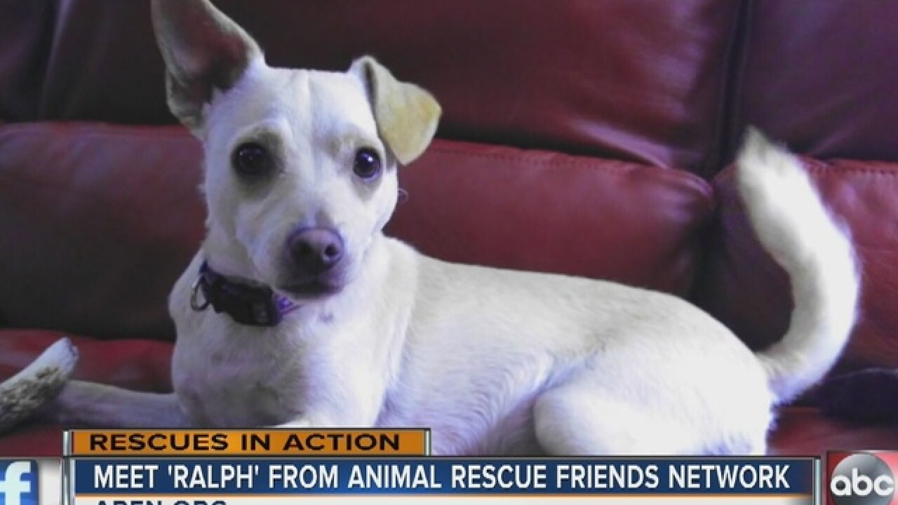 'Ralph' is looking for a new home, for the...
