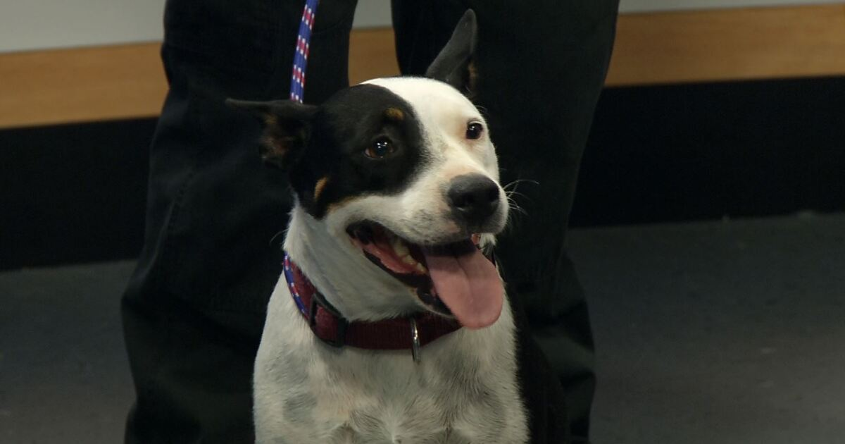 Pet of the Week: Molly