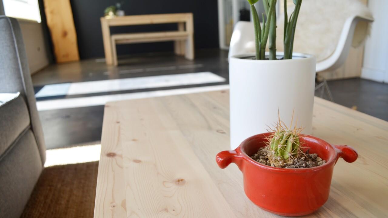Beetle-kill trees used for furniture_The Azure Furniture Company 2