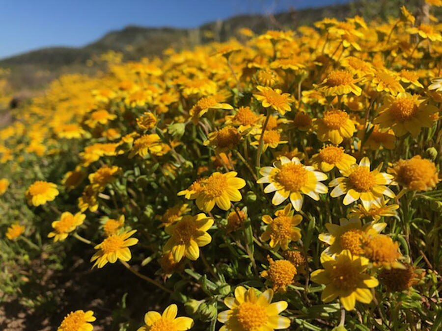 cabrillo_national_monument_flowers.jpg
