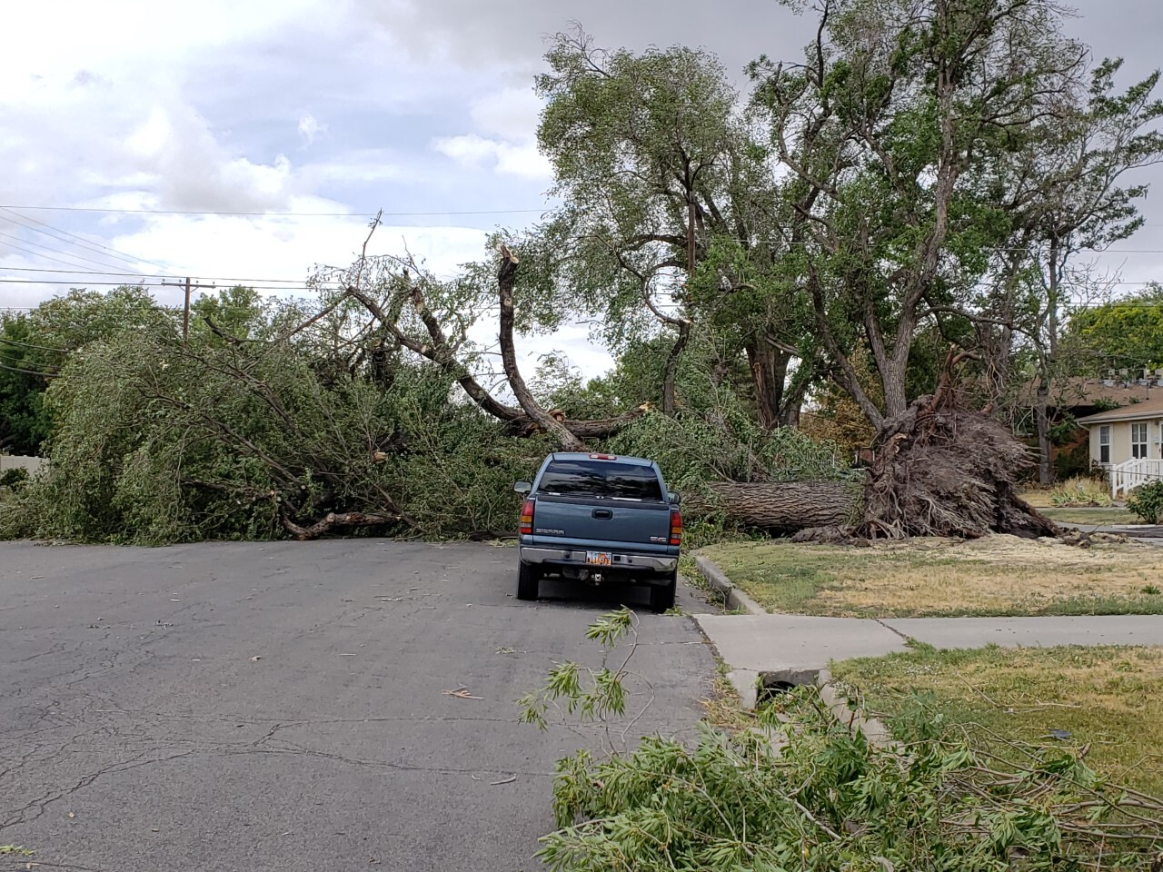 Tree down in North Salt Lake