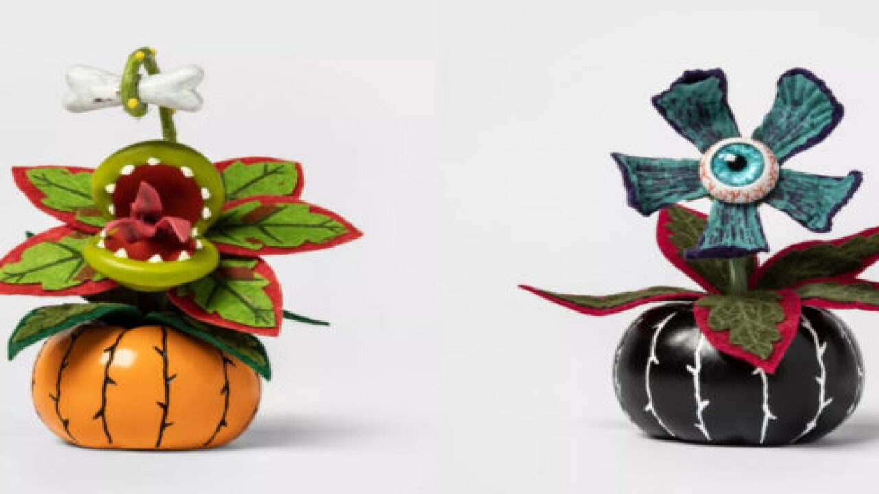 Target Has A Whole Line Of Halloween-inspired Succulents For Just $4 Each