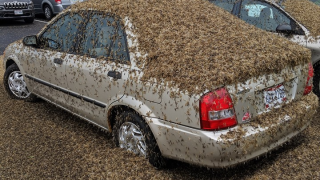 Gross! Millions of mayflies captured on radar and with photos