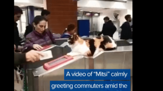 Video extra: Cat greeting travelers at Israeli train station goes viral