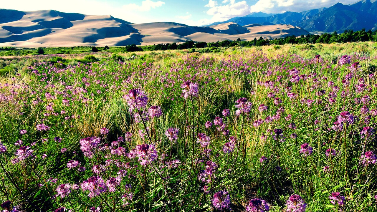 Great Sand Dunes National Park and Preserve 42.jpg