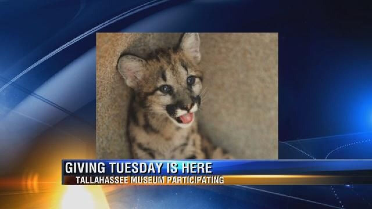 Tallahassee Museum is Fundraising to Bring Cougars to Town