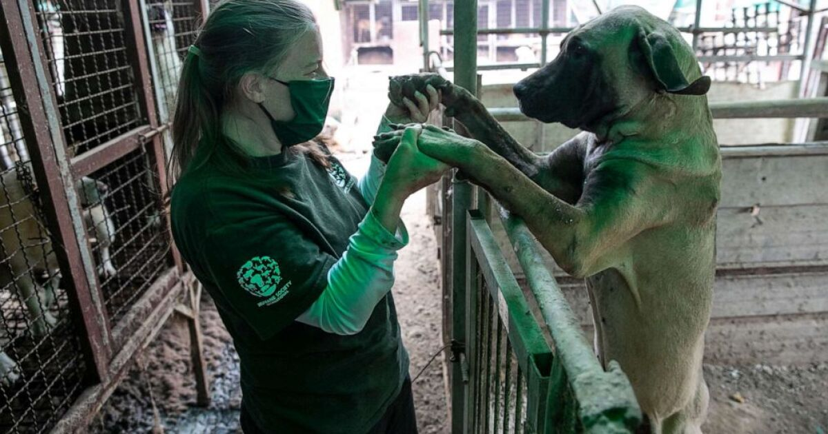 Almost 200 dogs rescued from South Korea dog meat farm now in US to find new homes