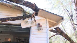 tree hits house.JPG