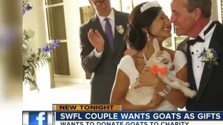 Newlyweds have a 1000 goat wedding