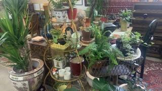vintage shop.jpg