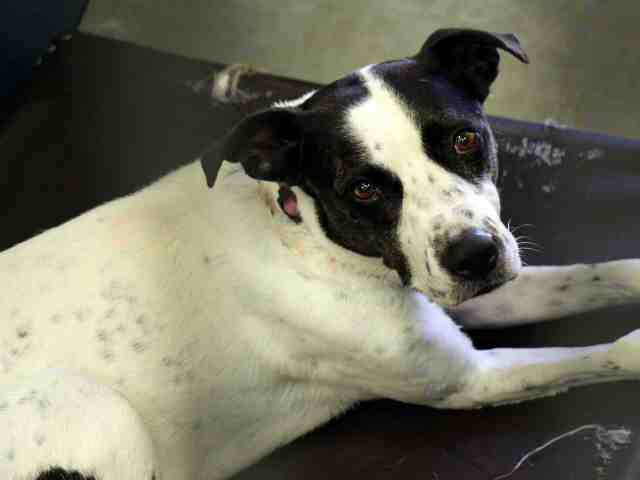 20 pets available for adoption in the Valley