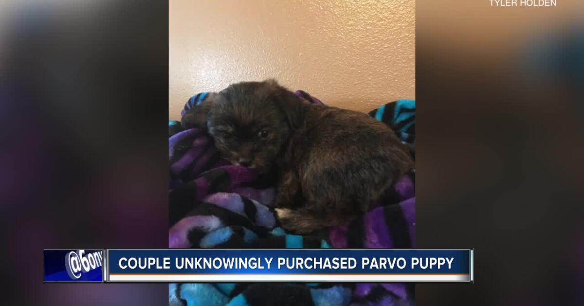Puppy with parvovirus dies six days after being taken home
