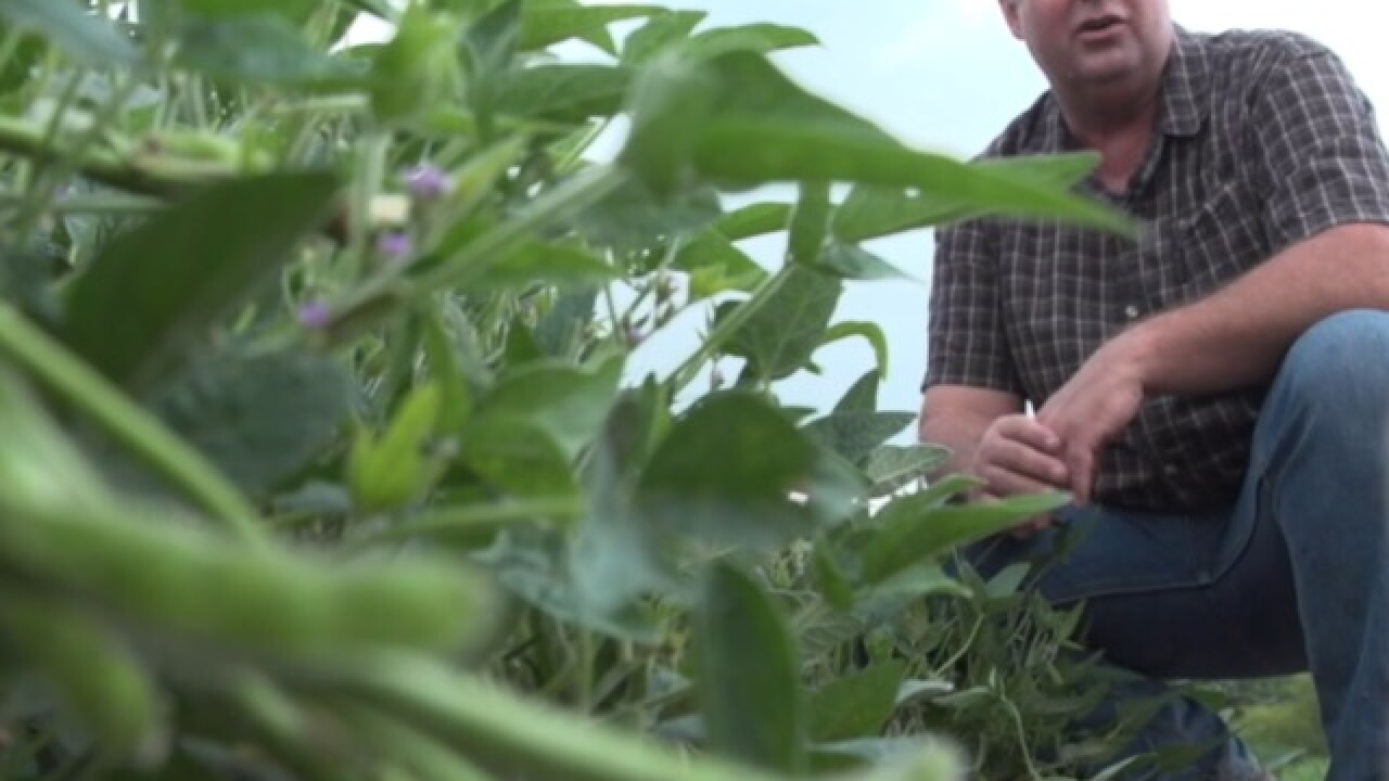 Soybean farmer affected by U.S.-China trade war works to find new trading opportunities