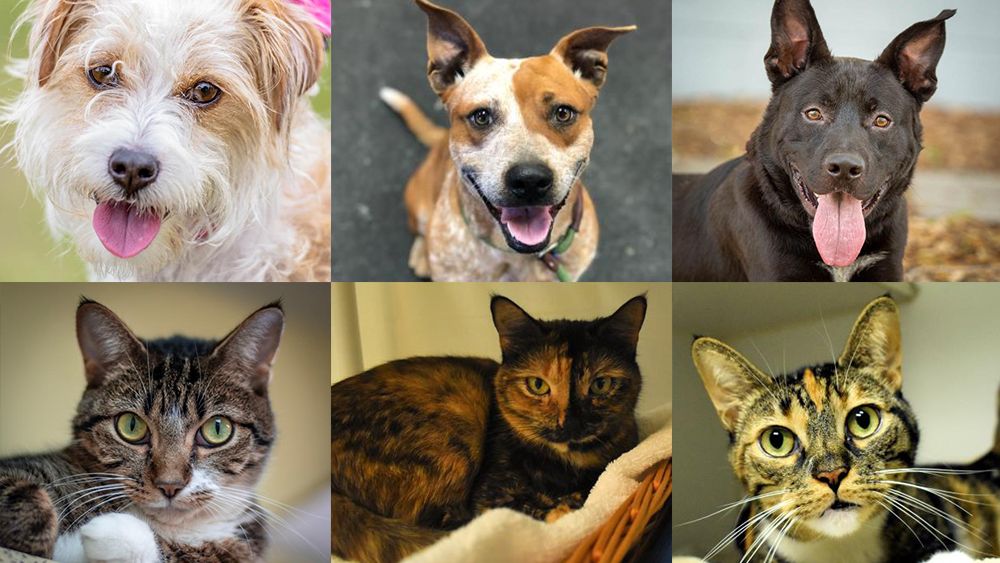 Adoptable-Pets-March-15.png