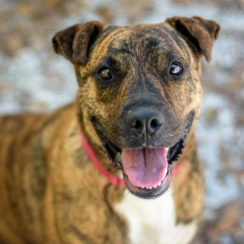 PHOTOS: 20+ adoptable pets in the Tampa Bay area for the weekend of August 10