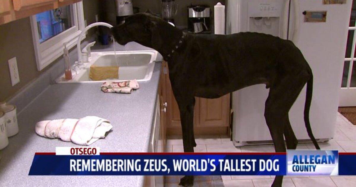 West Michigan S Own Zeus World S Tallest Dog Has Died