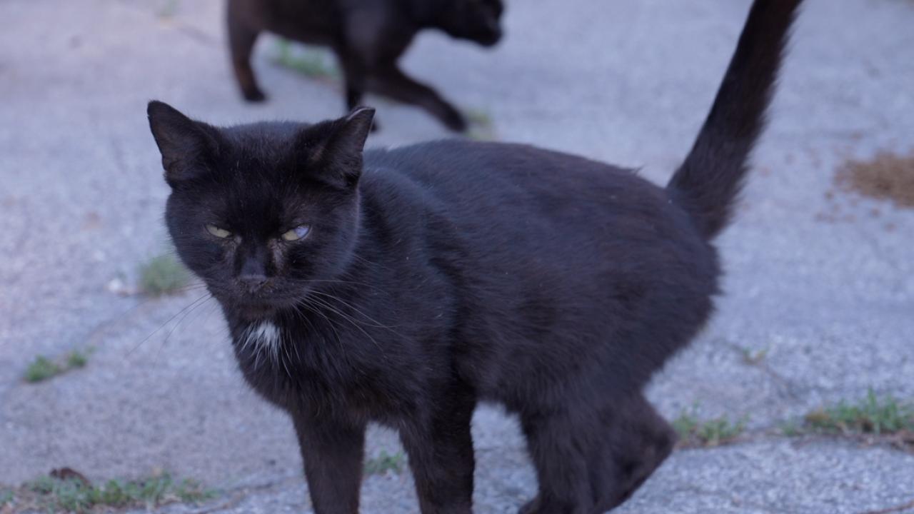 The Williamston Community Cat Project