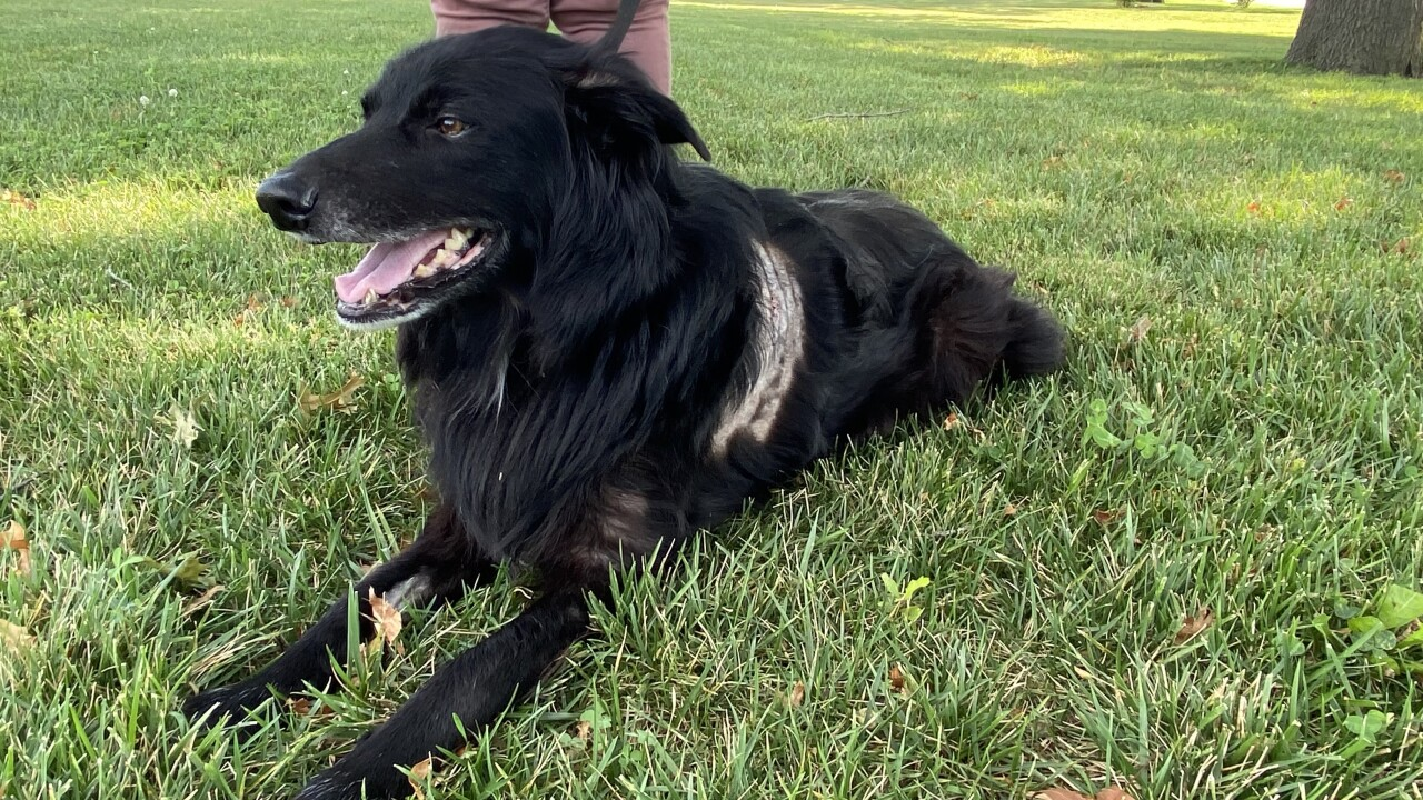 Bear, the dog whose owner tried to protect in a stabbing