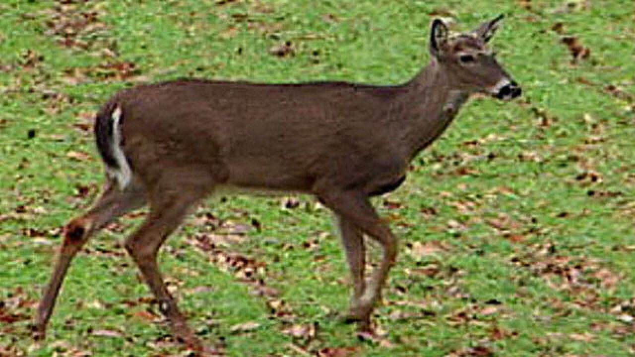 TDOT warns drivers of increased deer in roadways