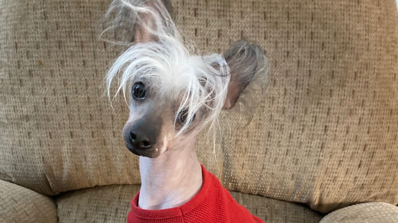 Nationwide Top 10 Wackiest Pet Names of 2020