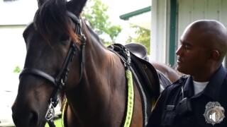 LEX PD HORSE2.jpg
