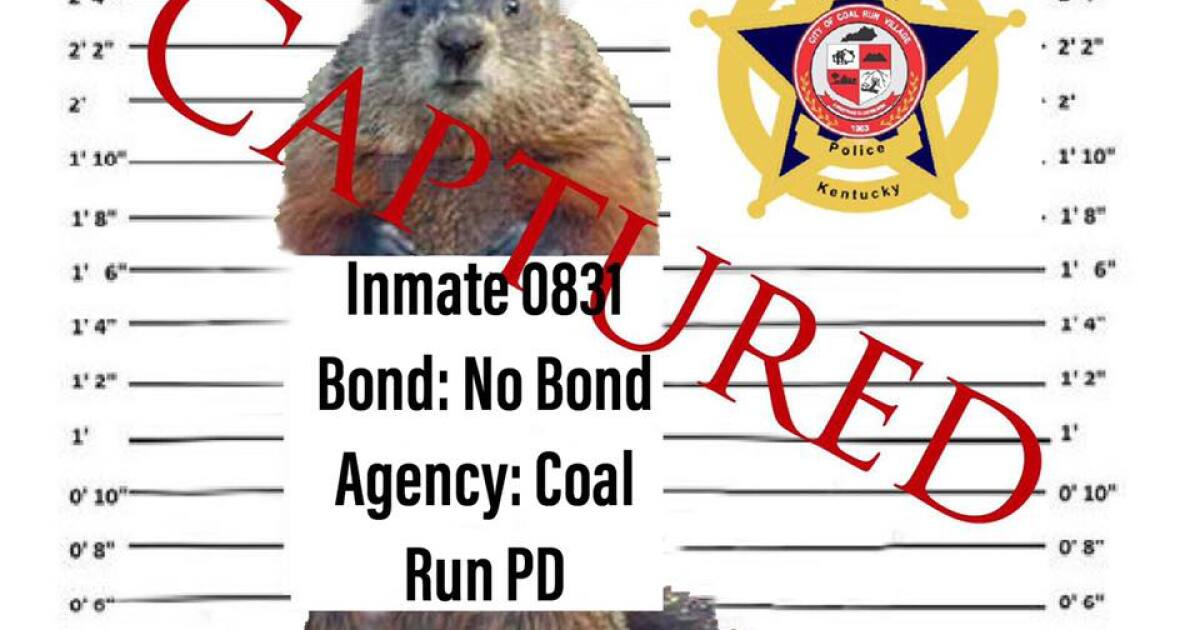Police Agency In Pike County Arrests Punxsutawney Phil
