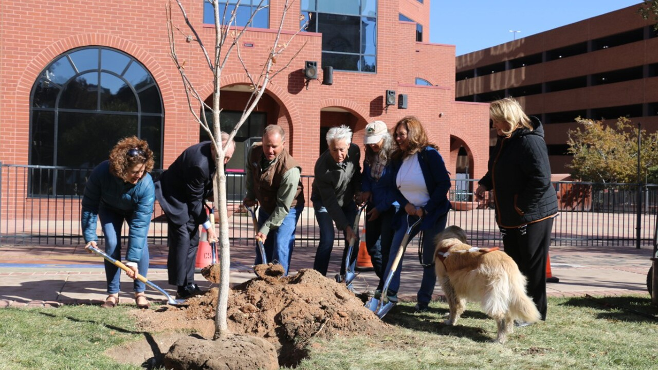 Colorado Springs Tree Challenge